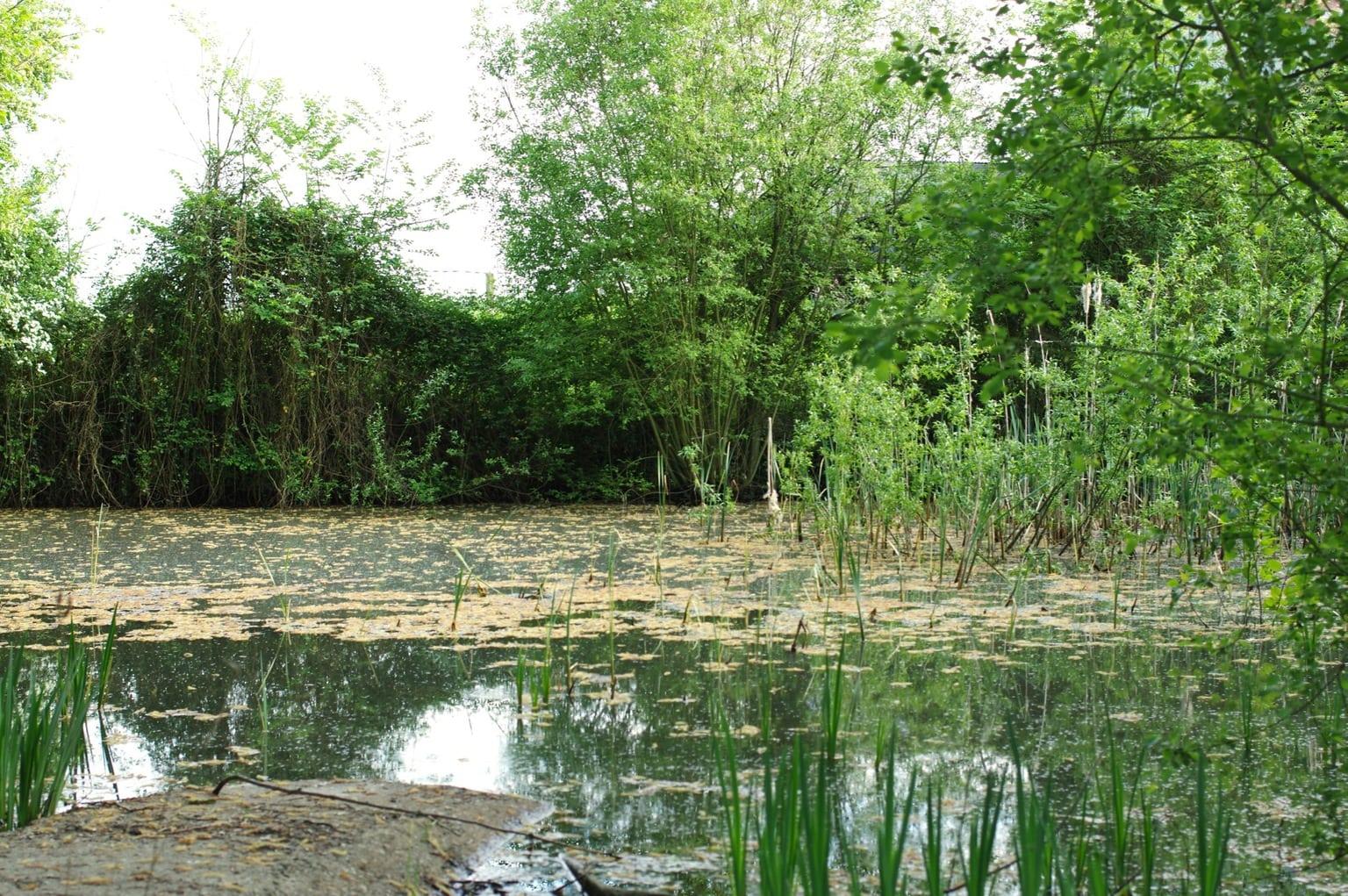 parc régional du Perche, une mare en pleine campagne française dans l'Orne - St Pierre La Bruyère