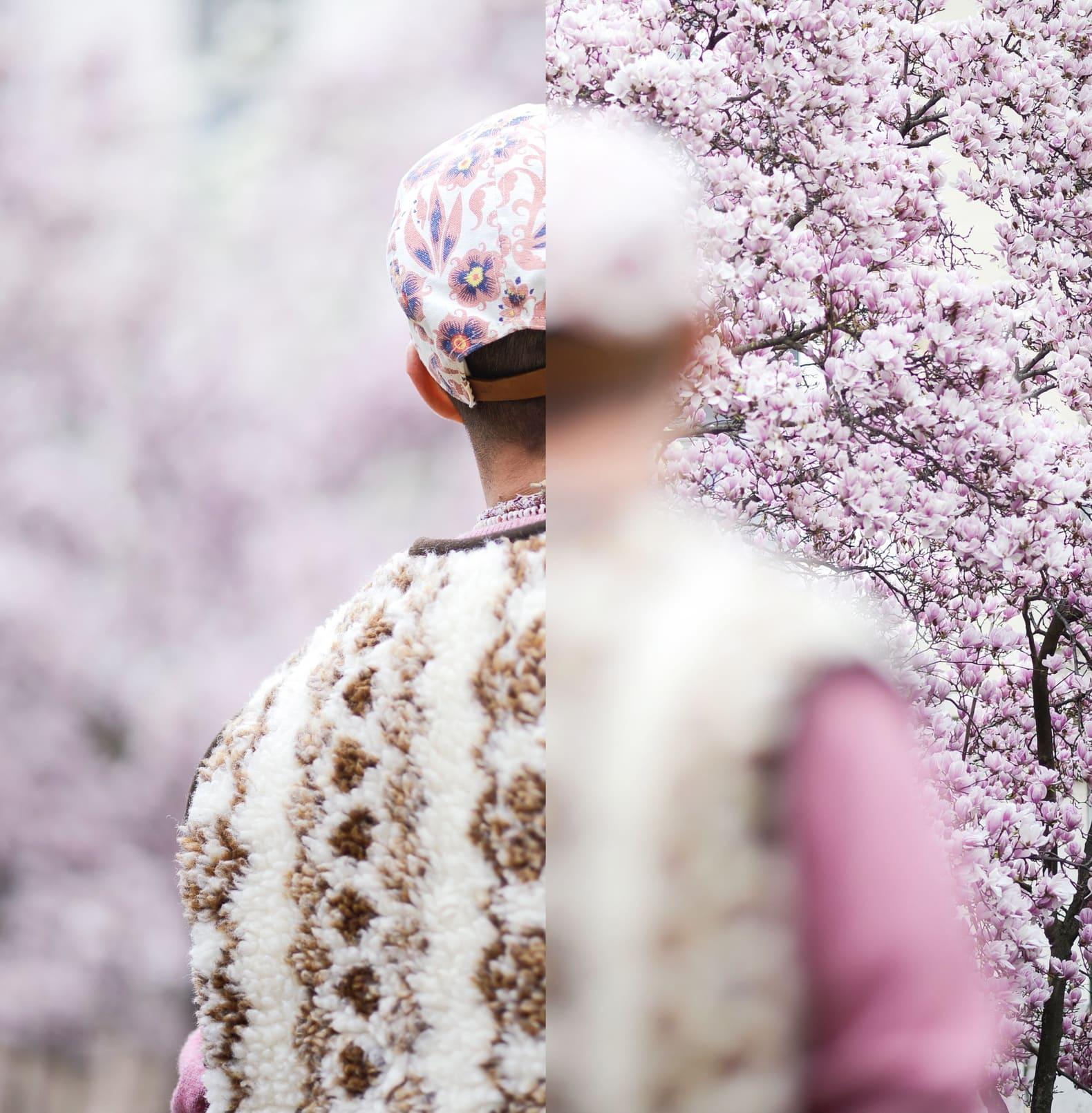 arbre-cerisien-fleurs-roses-homme-en-gilet