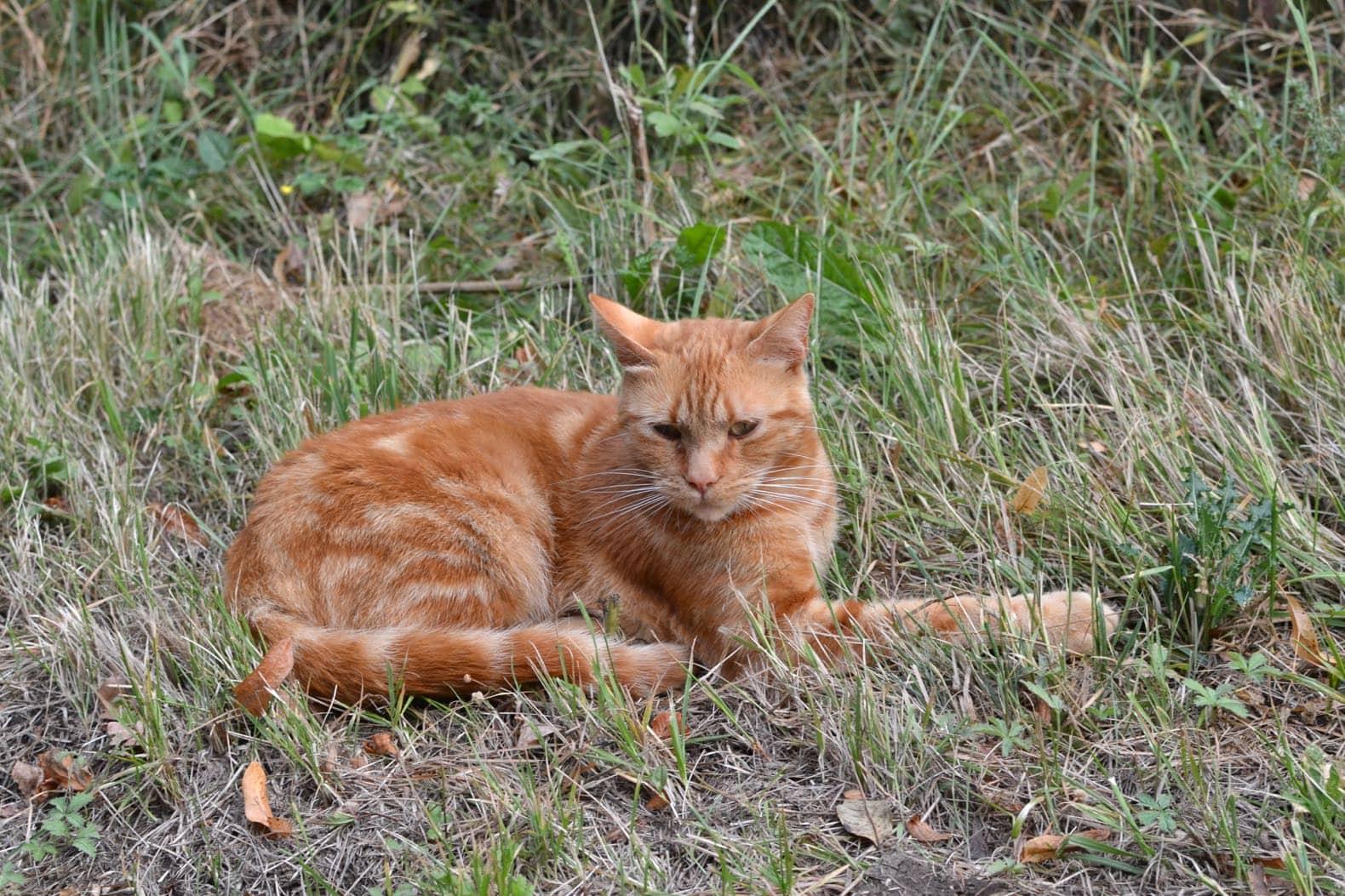 bernard le chat roux le plus beau